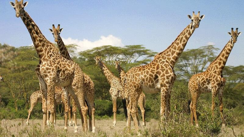 Beeindruckende Flora und Fauna im Jozani Nationalpark