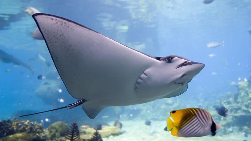 Aquarien: Einblicke in die Unterwasserwelt