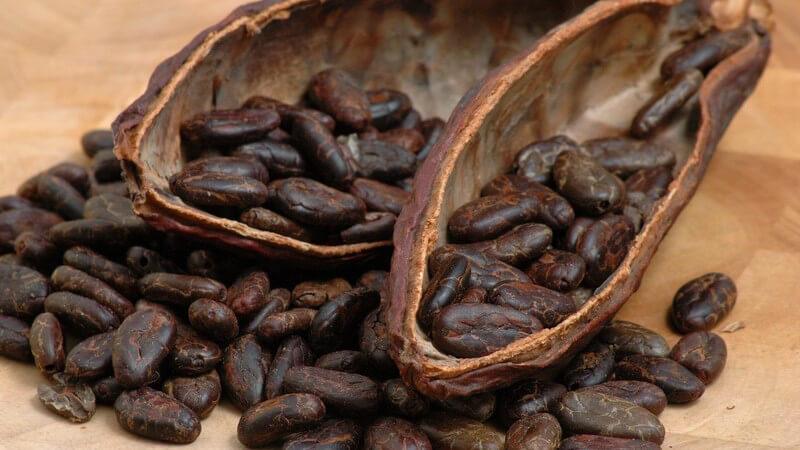 Kakao wird besonders gerne in Form eines Getränks sowie als Schokolade konsumiert