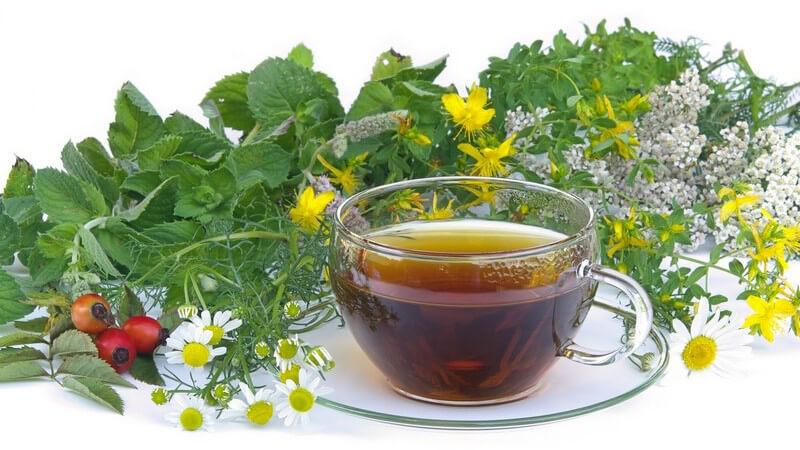 Verwendung von grünem Tee