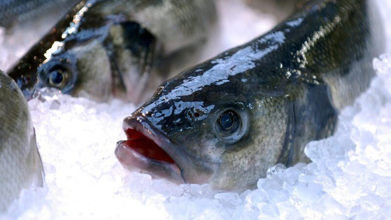 Tipps zum Einfrieren von Fisch