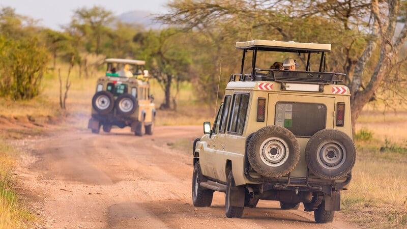 Alles Wissenswerte rund um die Safari