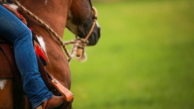 Eine Wanderung zu Pferd