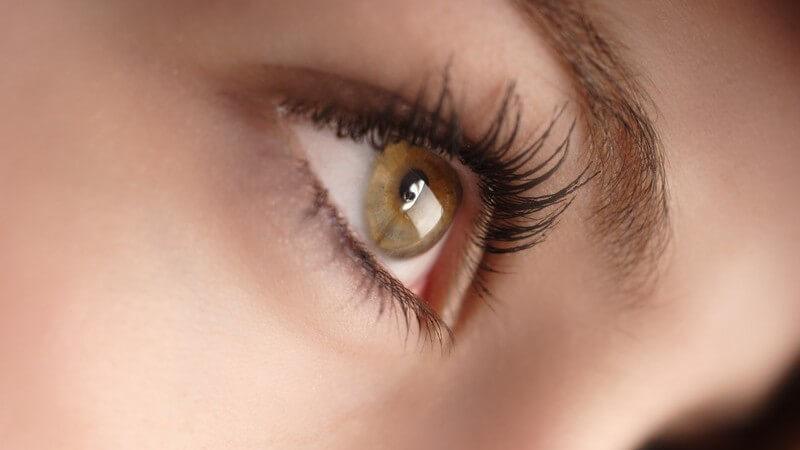 Hinweise zur richtigen Pflege, sowie zu den Risiken, Stich- und Schmuckstückvarianten eines Augenbrauenpiercings