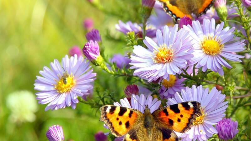 Schmetterlingen, Igeln, Vögeln und Bienen im Garten ein Zuhause bieten