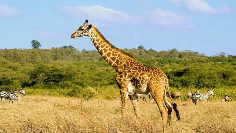 Wissenswertes über Safariparks