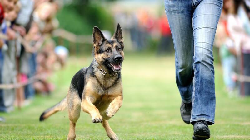 Fitness, wie z.B. Jogging mit dem Hund - Sportmöglichkeiten mit dem Vierbeiner