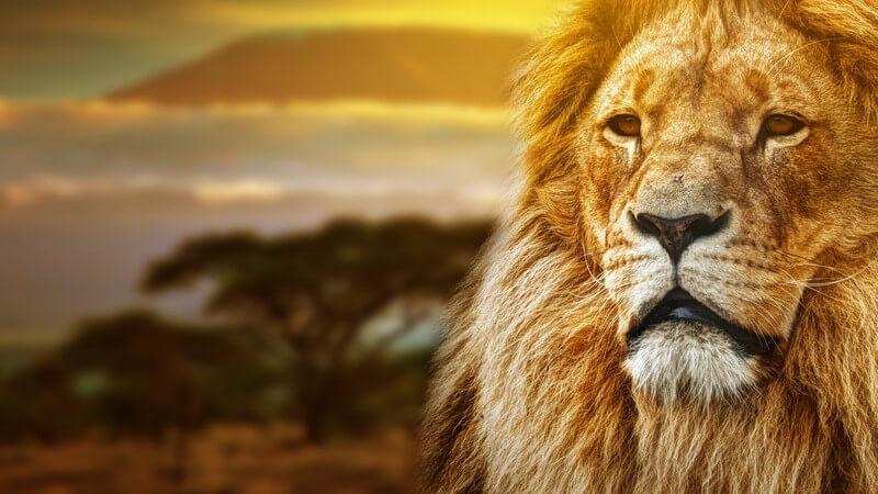Sehenswertes im Reiseziel Südafrika