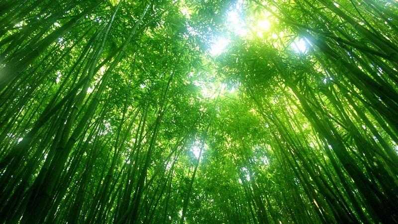 Der Wald als Freizeit- und Erholungsziel