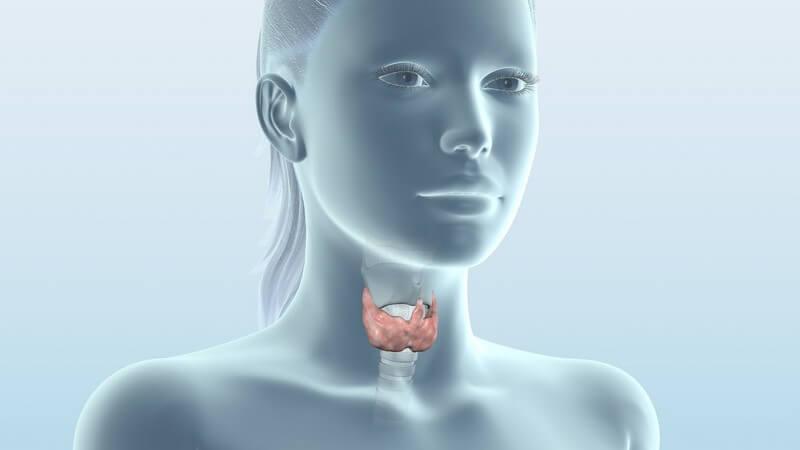 Man unterscheidet die primäre sowie die sekundäre Form der Hyperparathyreoidismus