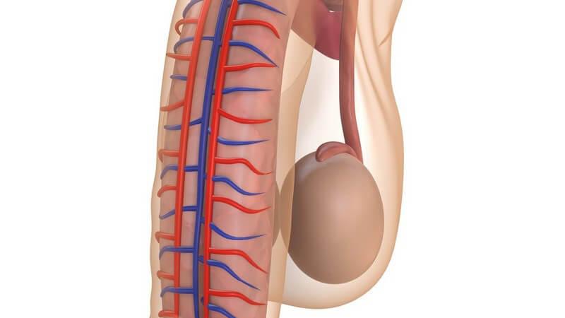 Zur Vergrößerung des männlichen Geschlechtsteils, kann eine manuelle oder operative Penisvergrößerung durchgeführt werden