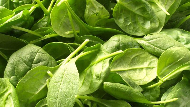Ob grün oder rot - Pesto bietet zahlreiche Variationsmöglichkeiten und passt zu vielen Gerichten - besonders lecker schmeckt es selbstgemacht