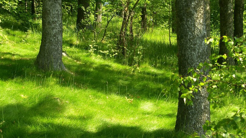 Die positiven Auswirkungen der Wirkstoffe von Bäumen auf die menschliche Gesundheit