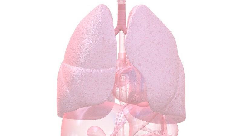 Bei kleineren Emoblien in der Lunge treten mitunter keine oder nur sehr leichte Beschwerden auf