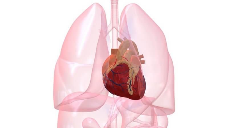 Von einer Luft- oder Gasembolie ist die rechte Herzkammer betroffen