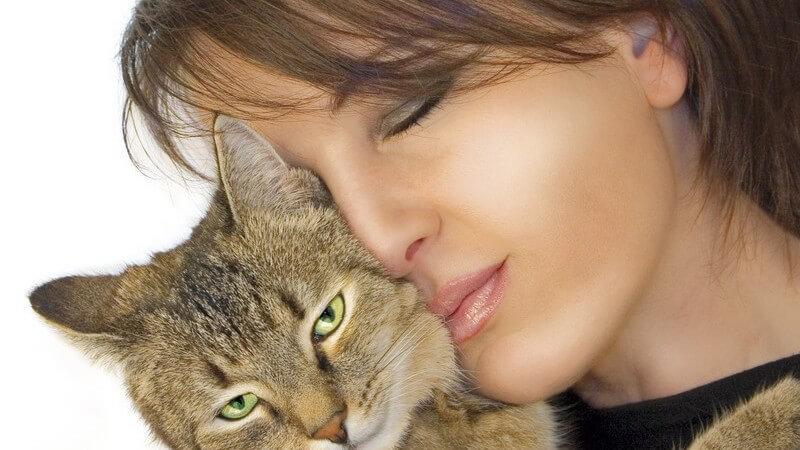 Die Allergene stammen aus Speichel und Hautschuppen der Katzen