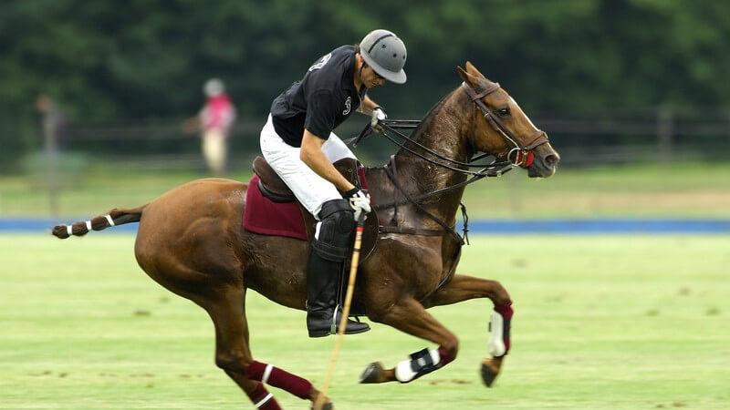 Polo, der beliebte Sport der Reichen und Schönen