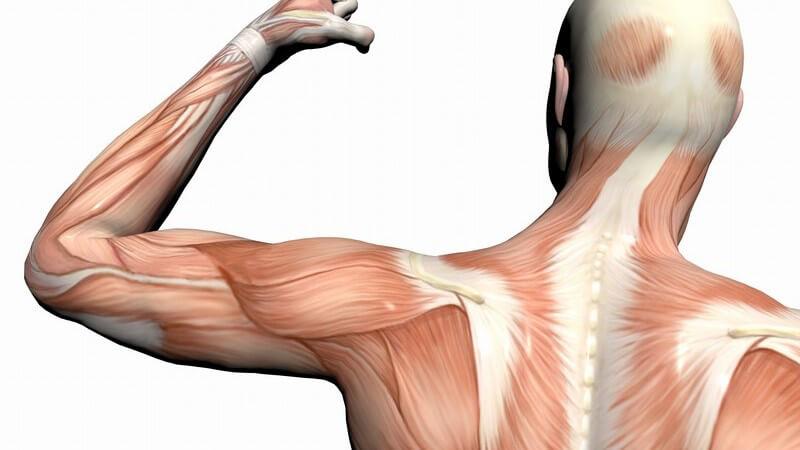 Welche Muskelgruppen werden beim Training mit dem Crosstrainer trainiert?