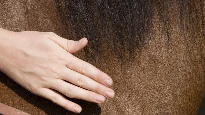Die verschiedenen Arten von Pferderennen und berühmte Rennen - von Ascot bis Kentucky Derby