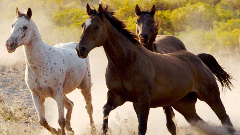 Wissenswertes zur Pferdezucht und über die Arbeit als Pferdezüchter