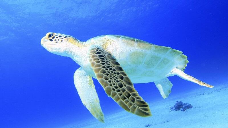 Besondere Schönheit unter Wasser fixieren - Wie man Pflanzen, Tiere oder Menschen unter Wasser fotografieren kann und welche Anforderungen an das Equipment gestellt werden