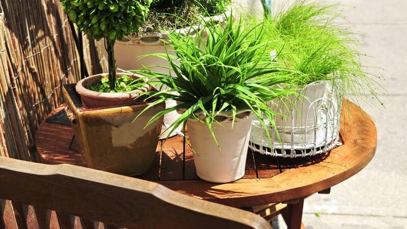 Bei den geeigneten Topfpflanzen muss man zwischen Blumen für den Innenbereich sowie denen für den Balkon und den Garten unterscheiden