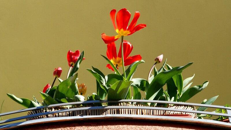 Ein Blumenkasten verschönert jeden Balkon sowie jedes Fenster - neben der Optik spielt jedoch auch die sichere Anbringung eine wichtige Rolle