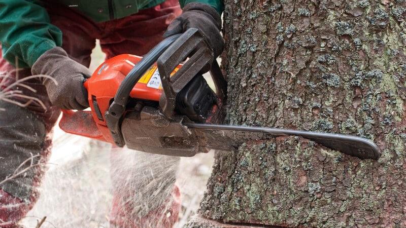 Ob im Wald für Kaminholz oder im eigenen Garten - Beim Bäumefällen sollte man sowohl beim Umgang mit der Motorsäge, als auch mit der Axt, einige Punkte beachten