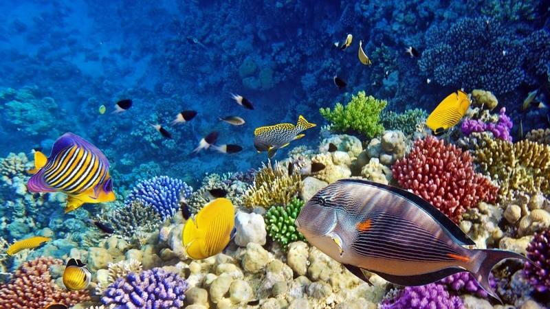 Beim Kauf eines Aquariums gilt es, einige Kriterien zu beachten - bei der Einrichtung sind bestimmte Pflanzen wichtig; des Weiteren gibt es eine Menge Zubehör