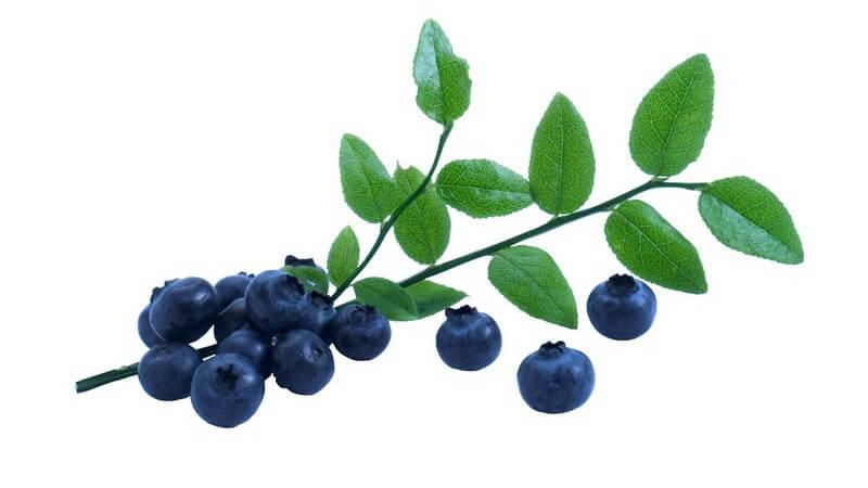 Die Acai-Beere ist reich an Antioxidantien und Vitaminen