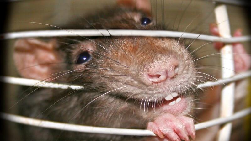 Maßnahmen gegen Tierquälerei