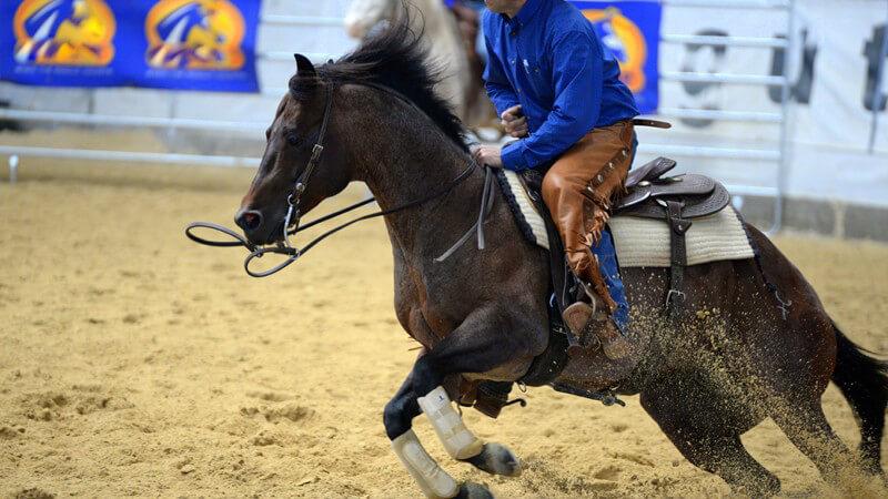 Westernreiten: Welche Pferde sich für das Westernreiten eignen und welche Ausrüstung man benötigt