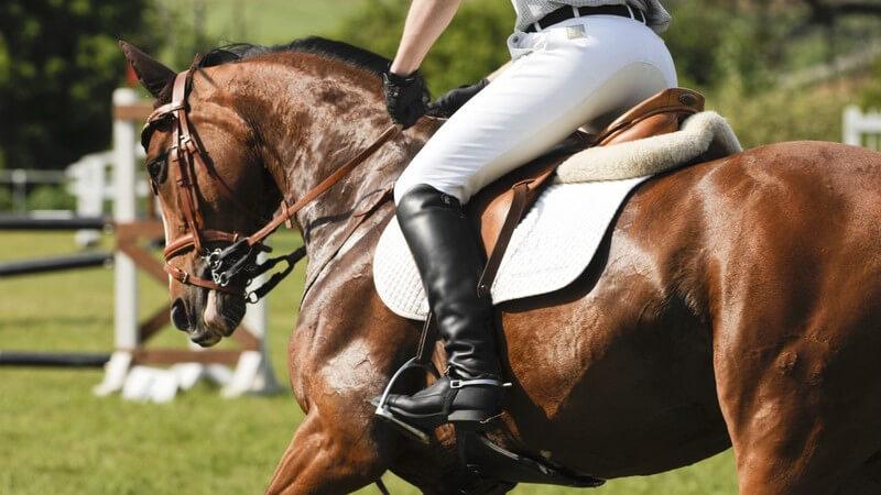 Rund um das Trabrennen: Pferderassen der Traber - Merkmale und Zulassungsvoraussetzungen