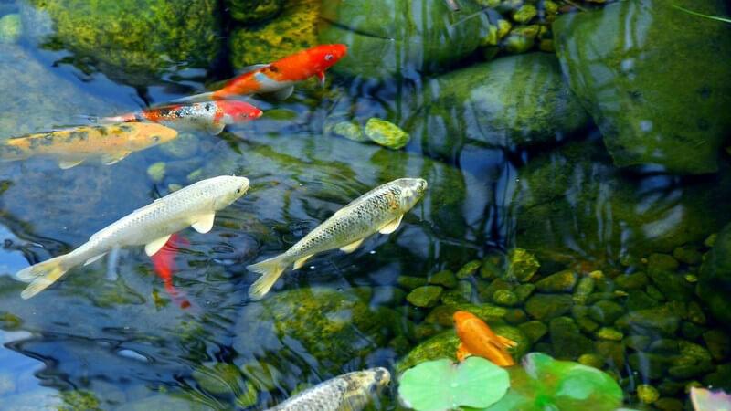 Um den Teich mit ausreichend Sauerstoff zu versorgen, muss dieser belüftet werden - besonders in kleinen Gewässern kann es schnell zu einer Unterversorgung kommen