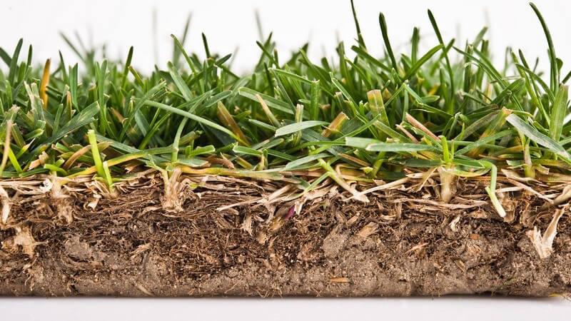 Einen Rollrasen verlegt man und schon kann man sich über einen perfekten Rasen freuen - als nachteilig lässt sich der hohe Preis festhalten