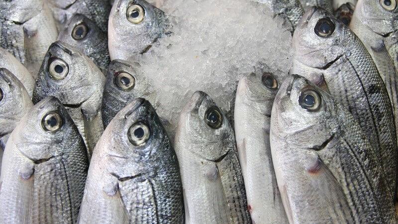 Welche Fische die meisten Nährstoffe enthalten und welche durch Umwelteinflüsse besonders belastet sind