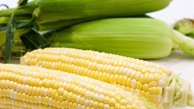 Wissenswertes zum Transgenen Mais