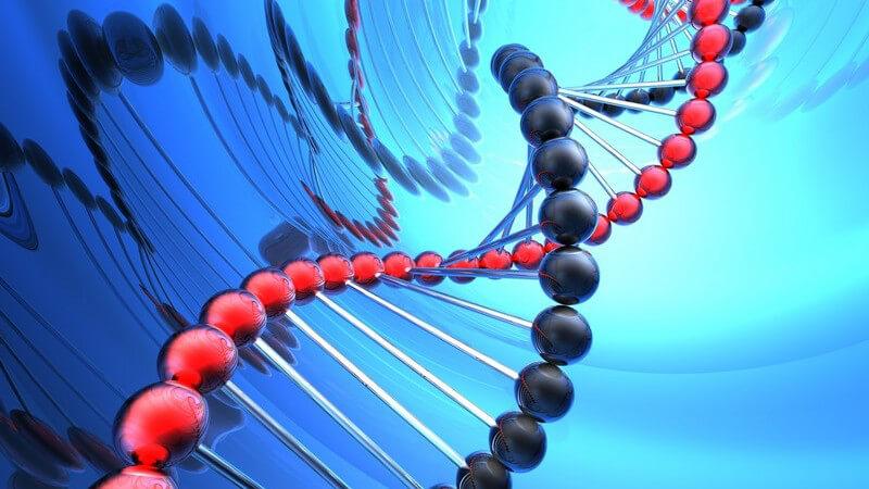 Arminosäuren gelten als Bausteine des Lebens und sind u.a. an der Stärkung des Immunsystems, der Muskelkontraktion sowie der Zellerneuerung und -reparatur beteiligt