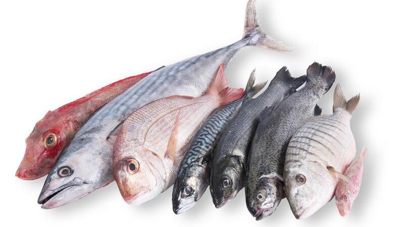 Fleisch und Wurstwaren sowie Fisch und Milchprodukte enthalten wichtige Arminosäuren - fetthaltige Produkte sollten immer in Maßen verzehrt werden, damit die Gesundheit profitiert