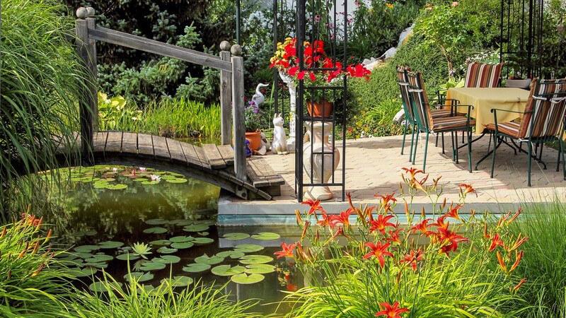 Zu den beliebtesten Teichpflanzen zählen die Seerosen; mit bestimmten Pflanzen lässt sich das Teichwasser klären