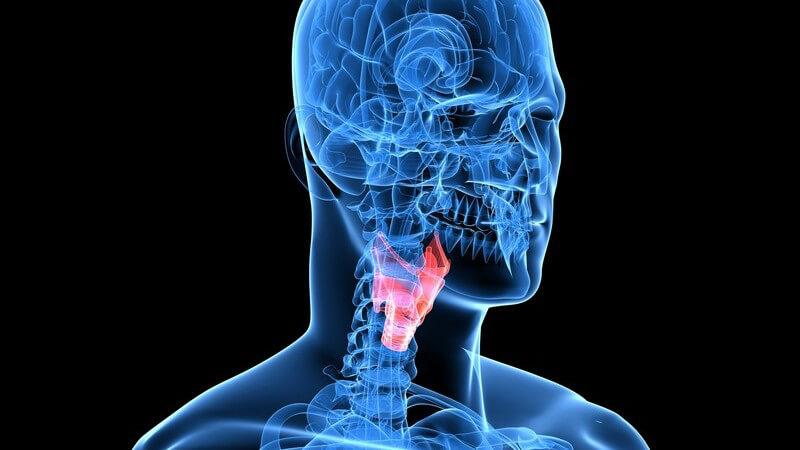 Die Entstehung einer Kehlkopfentzündung und wie man die Laryngitis erkennen und behandeln kann