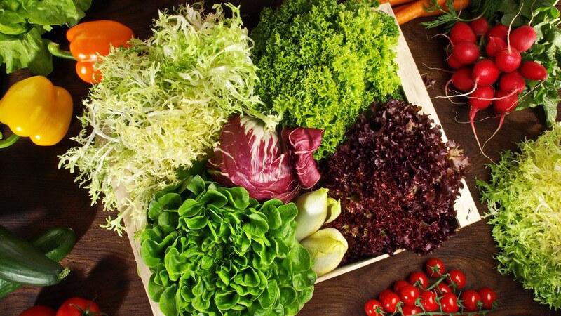Wissenswertes zum Salat