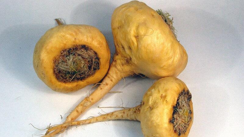 Wichtig sind eine gesunde Ernährungsweise mit viel Obst und Gemüse; auch Vitalpilze sowie der Nopal und die Maca-Knolle sind bei einem Mehrbedarf an Mineralstoffen hilfreich