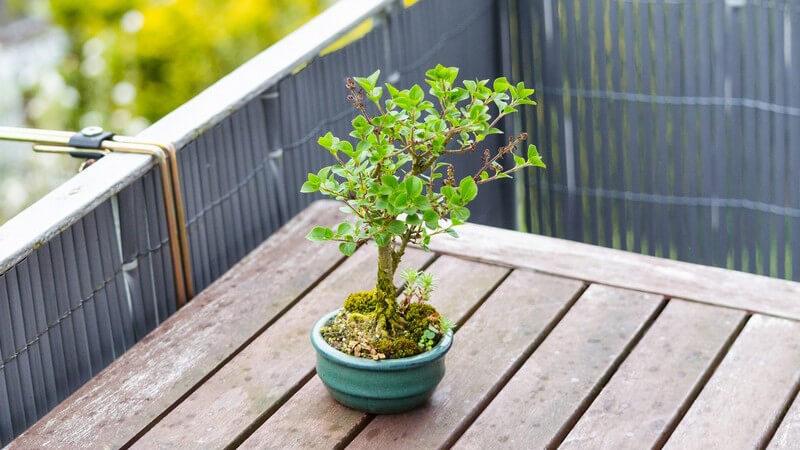 Aus einem Balkon oder einer Terrasse lässt sich beispielsweise ein Wintergarten machen; auch eine Überdachung oder ein gänzlicher Neubau einer Terrasse etc sind möglich