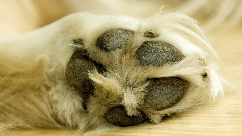 Auch Bello braucht Sauberkeit - den Hundekorb reinigen