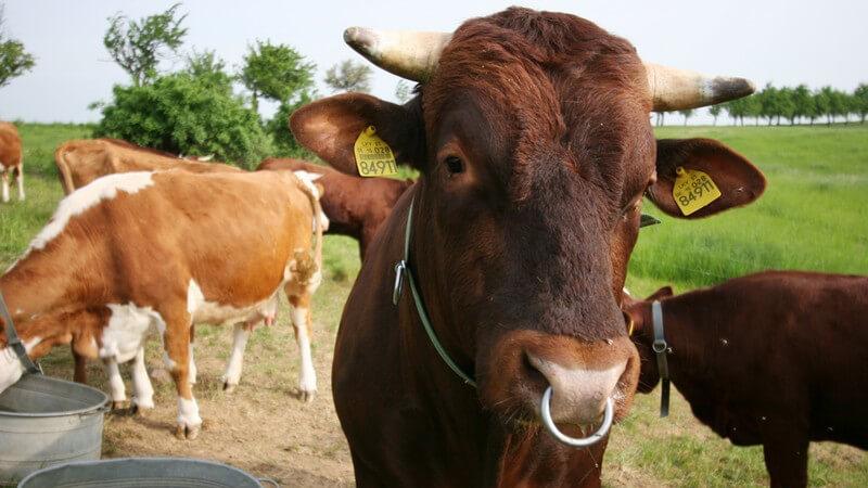 Die Tierhaltung wird eingeteilt in die Nutztier-, Heimtier- und Wildtierhaltung - Bei bestimmten Tierarten kommt es auf eine besondere Überwinterung an