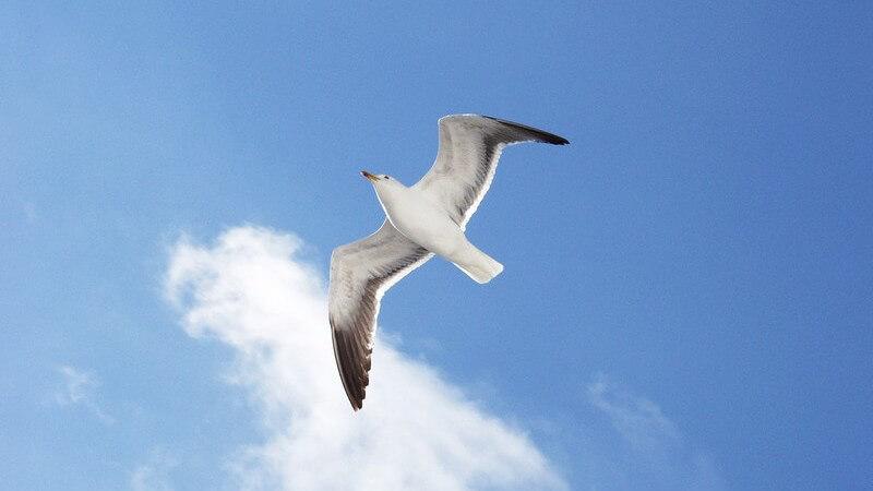 Vögel können besonders gut sehen - dabei gibt es Unterschiede in der Sehfähigkeit, je nachdem ob es sich um nachtaktive oder tagaktive Vögel handelt