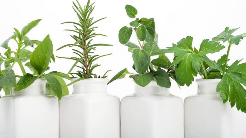 Für die Hydrokultur eignet sich nicht jede Pflanze; als Haltesubstrat kommen verschiedene Substanzen infrage