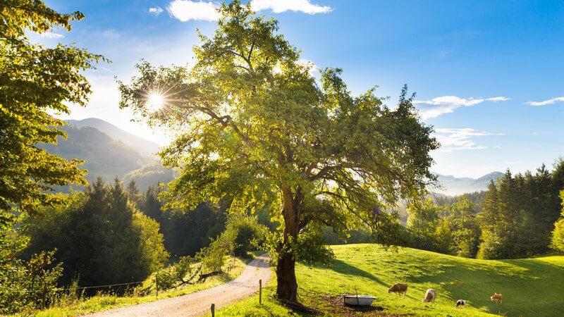 Sehenswertes im Reiseziel Slowenien