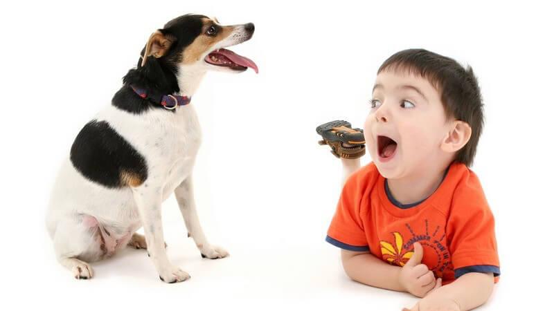 Wie man mit einem Hund richtig umgeht, wenn ein Baby unterwegs ist, wie man das Tier an ein Baby gewöhnt und wie Eltern ihren Kindern den richtigen Umgang beibringen